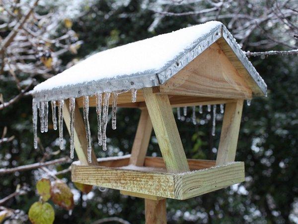 Namrzající déšť způsobil, že led pokryl plody na stromech ikeřích, a tak především ptáci trpí nedostatkem potravy.