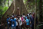 Účastníci jízdy Toulavého autobusu dostali možnost seznámit se spralesními dřevinami. Je jedním z afrických paradoxů, že ačkoli děti žijí nasamém okraji tropického deštného lesa, téměř nic o něm nevědí.
