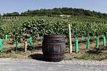 Vinice a vinařství Salabka v pražské Troji.