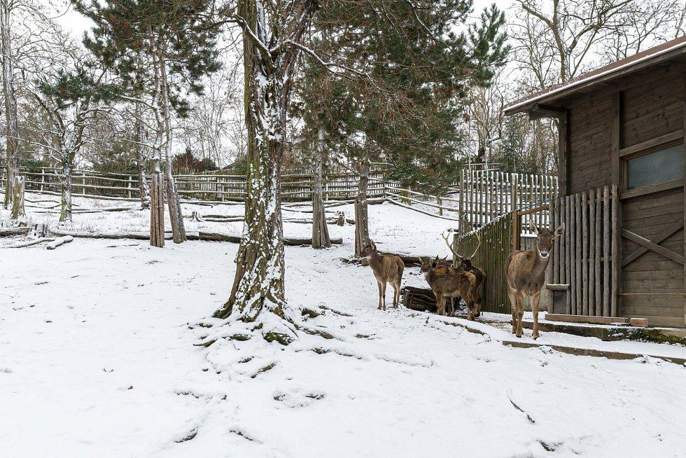 Zoo Praha zveřejnila fotografie ze zavřeného areálu.