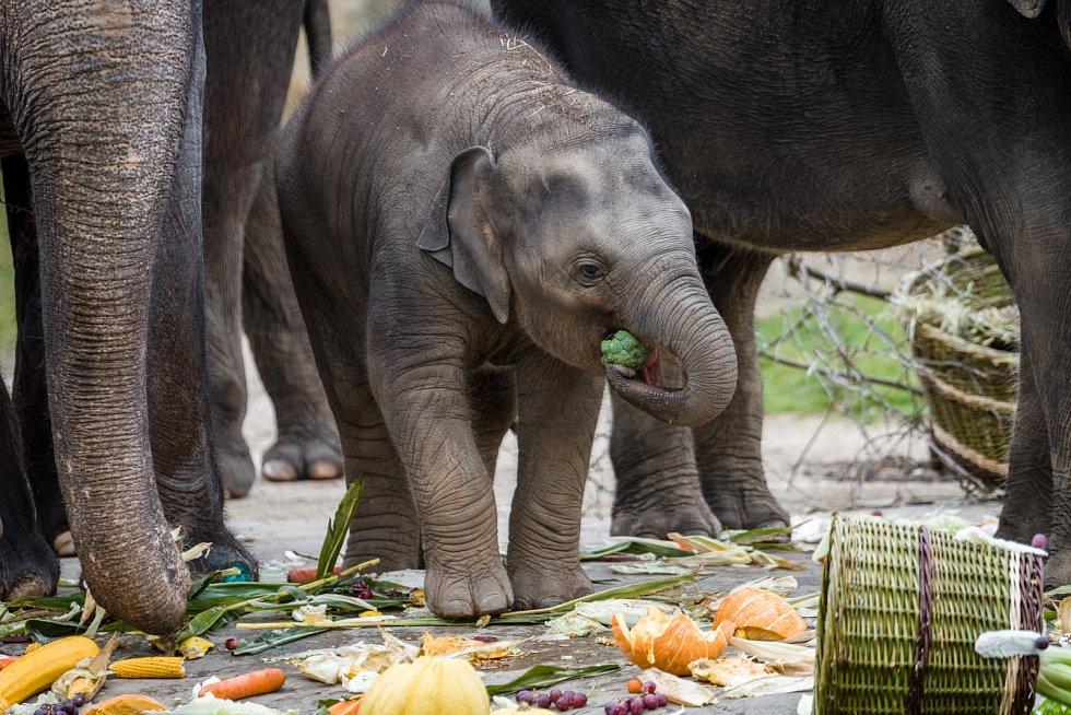 Narozeninový dort slonice Lakuny.