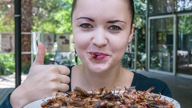 Sobota a neděle bude v Zoo Praha patřit hmyzožravcům. Lidé budou moci ochutnat hmyzí delikatesy.