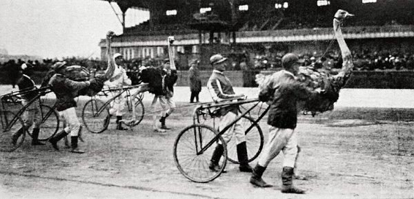 Pštrosí klusáci na snímku zLetenského stadionu zroku 1924.