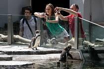 Tisíce lidí navštívili 6. července pražskou zoo. tučňáci