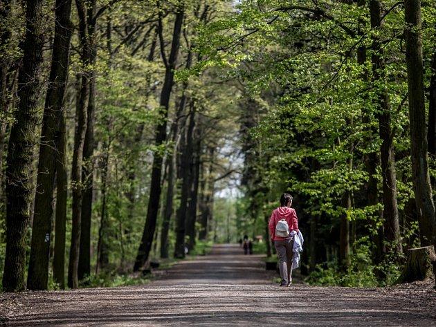 Milíčovský les.