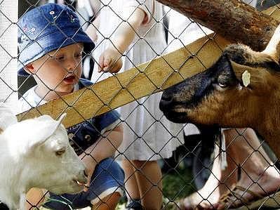 Na Střeleckém ostrově se děti můžou pohladit oblíbená zvířata.