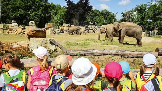 Zoo úspěch oslaví vstupem pro děti za korunu.