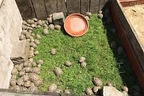 Pracovníci České inspekce životního prostředí našli 264 želv.