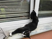 Kočka visící z okna.