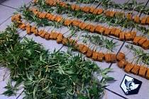 Zajištěná marihuana