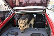 Policisté v Praze zadrželi cizince, kteří měli v autech pervitin.