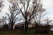 Odborníci ošetřili stromy na Štvanici.