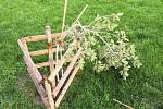 Neznámý vandal poničil nejvzácnější strom Čelakovského sadů u Národního muzea.