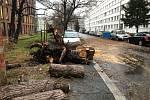 Bouře Sabine v pražském Karlíně převrátila strom.