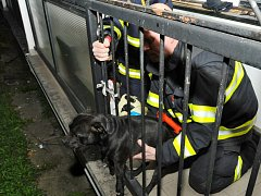 Záchrana psa.