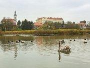Mlýnský rybník je sice krásnou dominantou Říčan u Prahy, ale dlouhá léta se jeho stav zhoršoval.