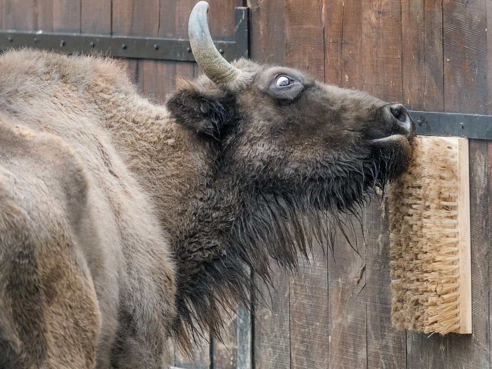 Hmatové vjemy lze u zvířat umocnit rozmístěním speciálních masážních prvků. Například u zubrů jsou to kartáče, o které se tito sudokopytníci mohou drbat.