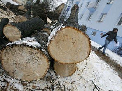 Pokácené stromy v Katusické ulici v pražských Kbelích.
