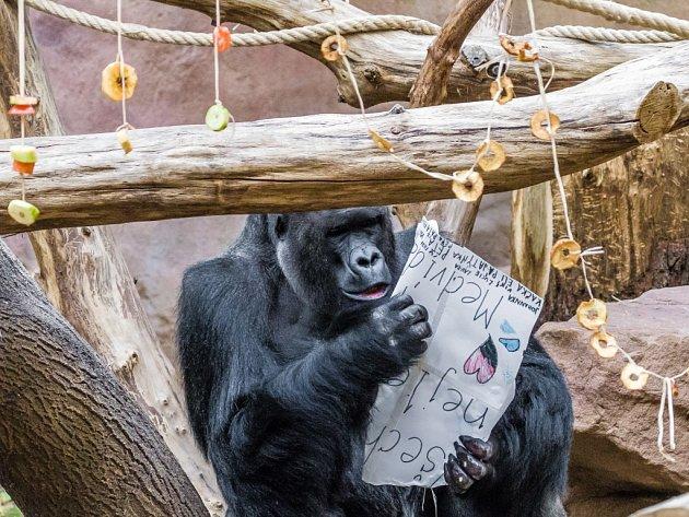 Na Richarda čekalo narozeninové přání, napsané na jedlém cukrářském papíře cukrářskými fixami s různými příchutěmi.