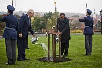 Prezident republiky Miloš Zeman symbolicky v reprodukčních zahradách Pražského hradu zalil lípu, kterou dostal ke svým 70. narozeninám.