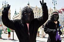 Letošní ročník Běhu pro gorily odstartuje z Hradčanského náměstí v Praze, kde bude zároveň i cíl závodu.