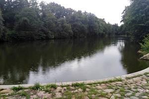V Cukrovarském rybníce v pražské Vinoři se objevil kapří herpes virus.