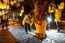 Kácení, přeprava a stavění vánočního stromu pro Prahu v roce 2019.