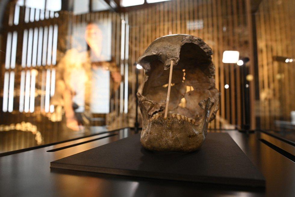 Národní muzeum představilo 2. června 2021 v Praze fosilní lebku ženy, která žila v době před více než 45 000 lety.
