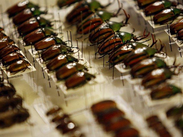 Dvoudenní mezinárodní setkání sběratelů hmyzu začalo 3. března v Národním domě na Vinohradech v Praze.