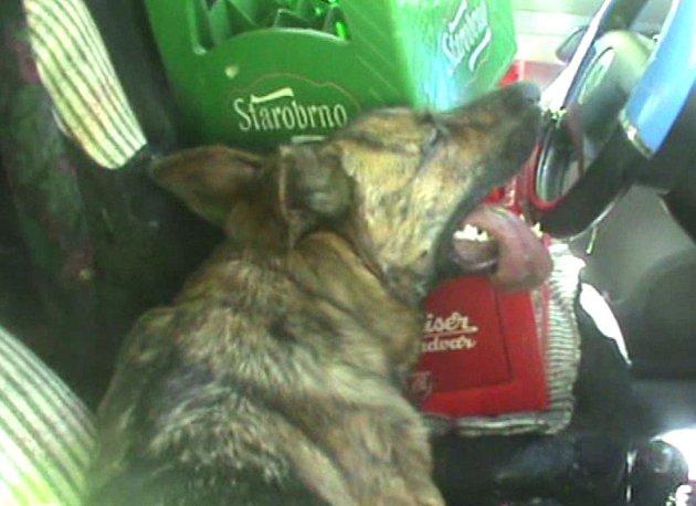 Psy ze zavřeného auta museli vysvobodit strážníci.