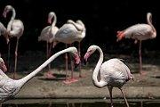 Tisíce lidí navštívili 6. července pražskou zoo. Plameňáci