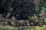 Tisíce lidí navštívili 6. července pražskou zoo. slon