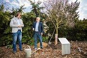 Vladimír Remek vysadil vzácný strom. Na snímku s Bohumil Černým - pověřeným řízením Botanické zahrady.