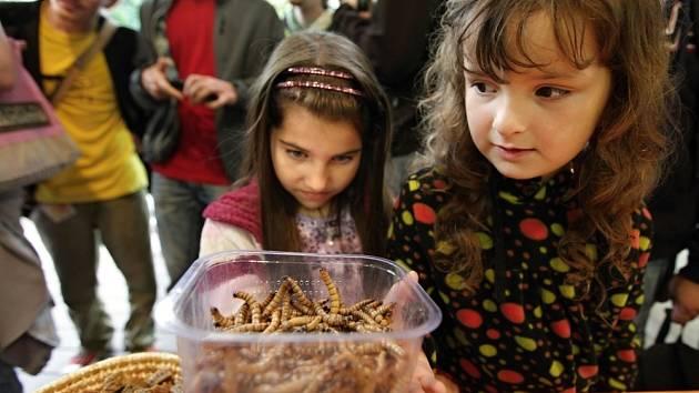 Den hmyzožravců je již tradiční letní akcí v pražské zoo.