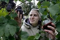 Vinobraní na Grébovce.