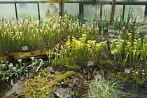 V Darwinianě se můžete podívat na výstavu masožravých a jiných exotických rostlin.
