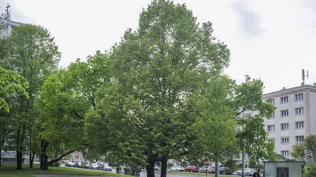 Stromy republiky - Větrník.