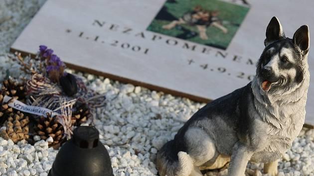 Zvířecí hřbitov. Ilustrační foto.