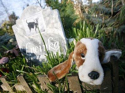 Zvířecí hřbitov v Bohnicích byl založen v roce 1999.