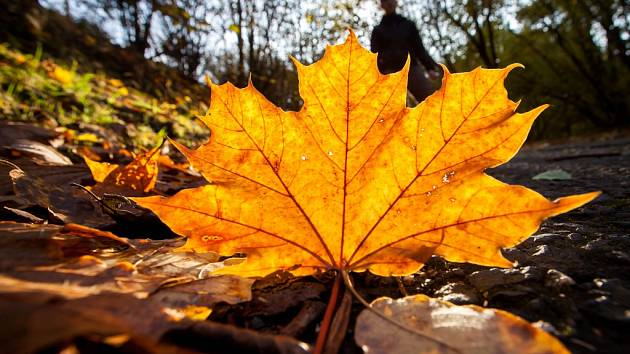 Podzim. Ilustrační foto.