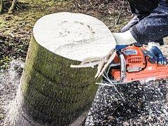 Kácení stromu. Ilustrační foto.
