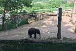 V zoologické zahradě v Praze můžete vidět i slůňata
