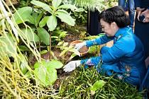 Při oficiální návštěvě vietnamského prezidenta navštívila první dáma Mai Thi Hanh pražskou botanickou zahradu. V tropickém skleníku zasadila rostlinu Arisaema claviforme.