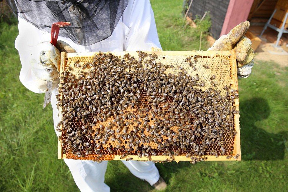 Chov včel na letišti v Ruzyni.