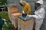 Zájem je podle něj o včelaření velký.