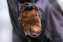 Poznejte tajemství netopýrů. V Praze jich žije 17 druhů.