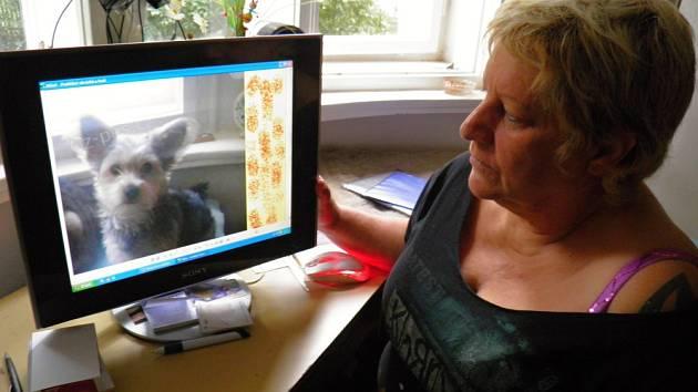 FOTKA jorkšíra Míši, prázdný pelíšek a pár hraček. To zbylo Aleně Skříčkové po jejím čtyřnohém parťákovi, který zmizel 16. června ve 12.40 ze Strašnic v okolí zastávky Vinice.