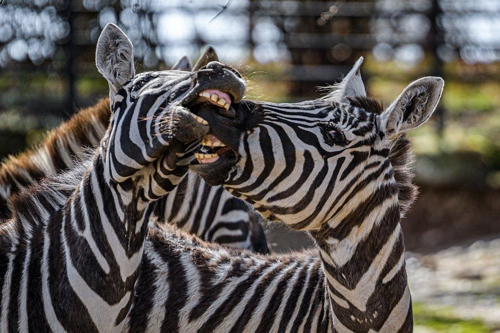 Zvířata v Zoo Praha během doby, kdy je areál zavřený kvůli koronaviru.