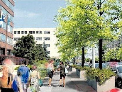 NA VIZUALIZACI NÁVRHU OZELENĚNÍ Olšanské ulice je i pro laika na první pohled patrné, že prostor pro kořenový systém stromů neodpovídá výšce vzrostlých akátů.