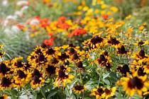 Dalším dílem botanických přednášek ve čtvrtek je téma Trvalky v přírodě a na zahradě.